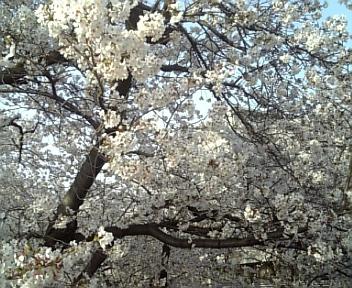 image/2011-04-09T18:31:19-2.jpg