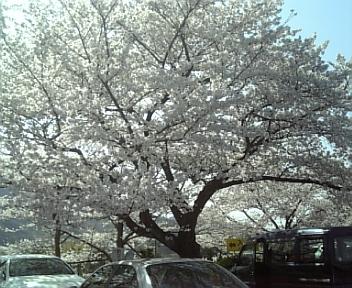 image/2011-04-10T18:11:21-3.jpg