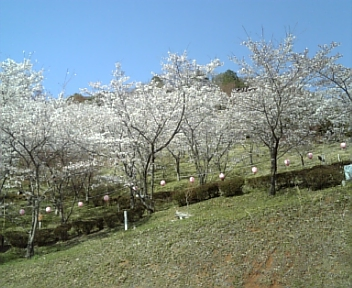 image/2011-04-12T20:14:54-1.jpg