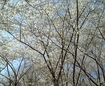 image/2011-04-12T20:14:54-2.jpg
