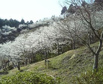 image/2011-04-12T20:14:54-4.jpg