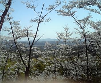 image/2011-04-12T20:14:54-5.jpg