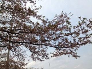 image/2013-04-16T12:14:57-5.jpeg