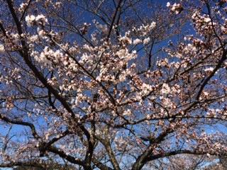 image/2014-04-02T12:42:43-3.jpeg