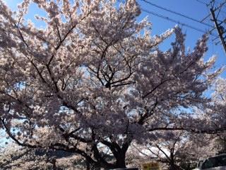 image/2014-04-06T16:49:42-12.jpeg