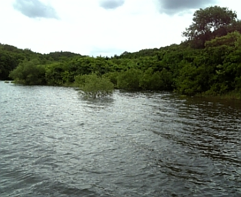 6月23日入鹿池釣行